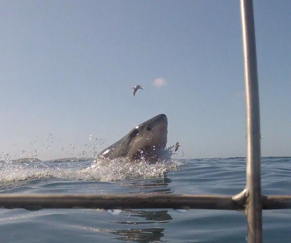 Cape Town, South Africa, Shark Alley